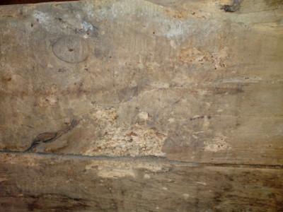 Elementi di degrado per i manufatti lignei: gli insettixilofagi