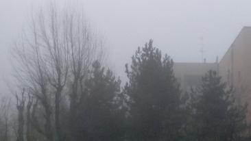 nebbia, sul retro.