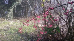 fiori nella nebbia.