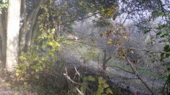 nebbia, con cane.