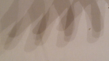 Luci e ombre, dita