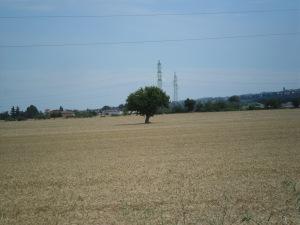 c0018-alberoGranon alberoampo di grano co
