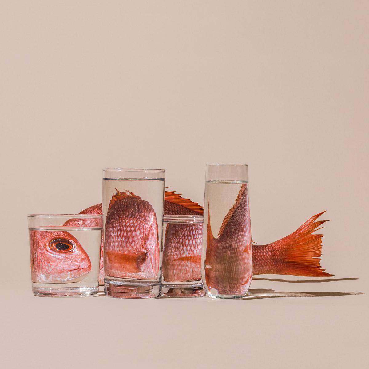 Fotografia – Gli oggetti distorti di SuzanneSaroff